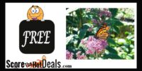 *FREE* Seed Packet To Help Butterflies!
